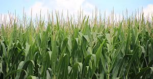 Ecostress medirá el estrés hídrico agrícola